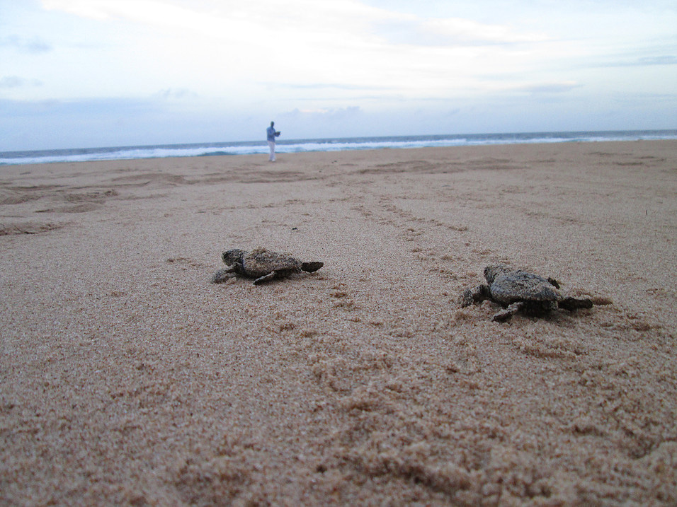 Turtles in Mozambique protected