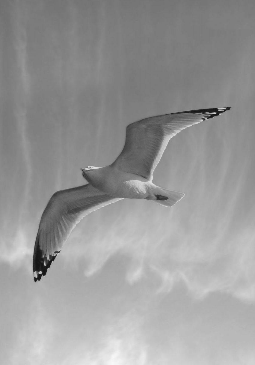 debbie hathway seagull