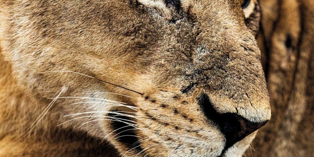 rethink-travel-singita-wildlife004-scaled
